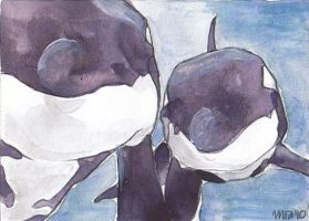 orcas by silverlode