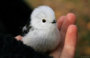 Long-tailed ball of fluff by Punakylkirastas
