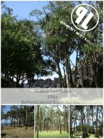 Tropical Trees - Unrestricted by Cat-in-the-Stock