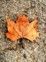 Leaf by GracieClements