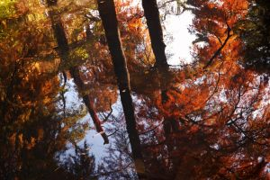 Autumn reflections by spoii