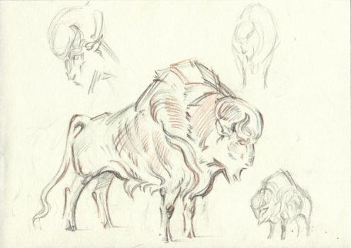 bison sketch by Unita-N
