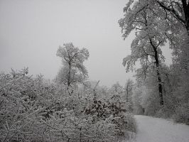 Winter-31 by Placi1