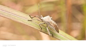 . unidentified insect. by valbury