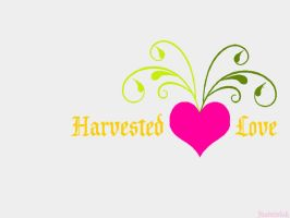 harvested love by fuadmisbah