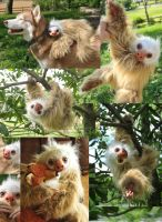 Realistic Two Toed Sloth by mooki003