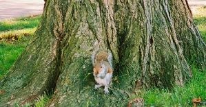 Squirrel Stock by MarshmallowInvader