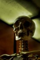 Skull 02. by mightyatomphoto