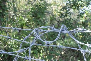 barb wire one by density-stock