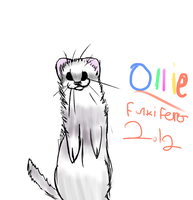 My ferret Ollie by FUNKIferret