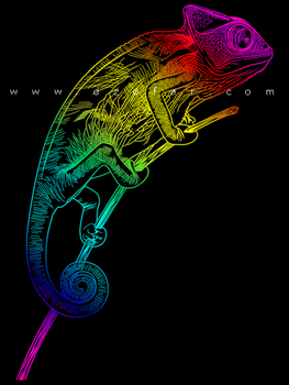 Chameleon Line Art Vector by ndop