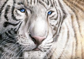 White tiger by IllegalHamsterThe