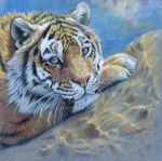 Tiger on the rock by sschukina