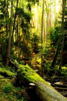 266 My forests 2 3166 by gacek