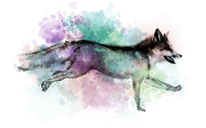 Marble Fox Color Splash by chertan-koraki