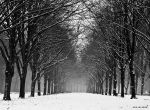 The cold months ahead. by VisualArtist-Jorn