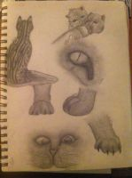 So..... Traditional Cat Sketches. by BettaFreak123