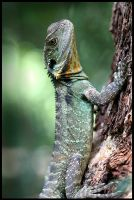 Lizard by Eman333