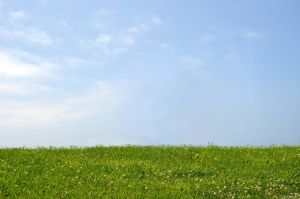 Grass and Sky Stock Photo-Premade background by annamae22