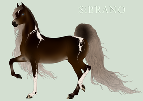 Sibrano Import 2013  Equineinc - point sale by Danesippi