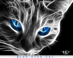 Blue Eyes Cat by josephlorate