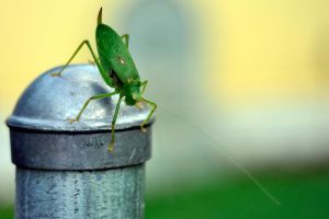 Grasshopper by cheslah