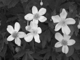 black and white flowers by I-LOveLife