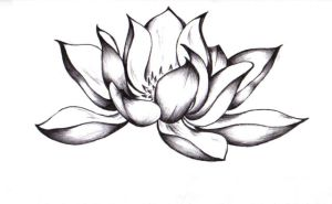 LOTUS by surf-4-life