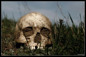 skull. by Gont