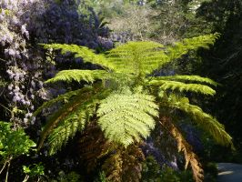 Giant Spider Shaped Fern, Sintra, Portugal by SrTw