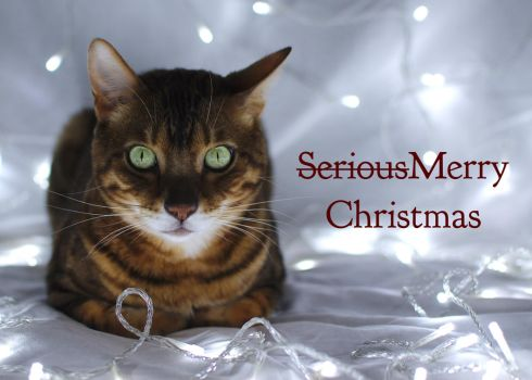 Srs Xmas by FurLined