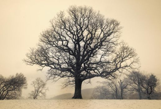 Infrared Tree, Keswick by richsabre