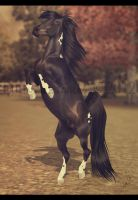 .:Living Young And Wild And Free:. by BlueMoonStables