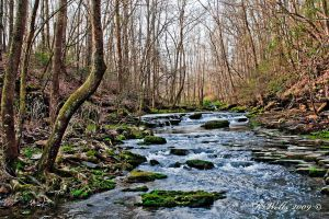 Shorts Springs Creek(HDR) by Ray4359