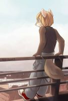 Watching the Sunset by Zengel