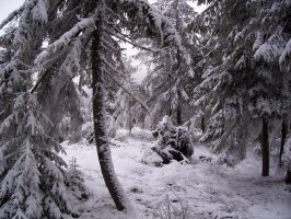 Snow-Forest-Stock-03 by Emo-Kiddo-Stock