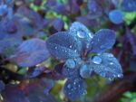 after rain by VasiDgallery