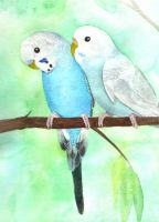Budgie pair by greencheek