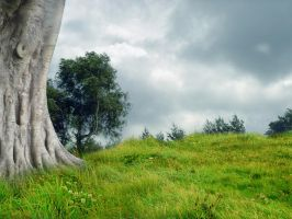 Green grass by queenphotoshop