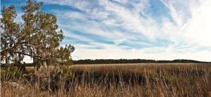 Wormsloe Marshes by linde-lazer