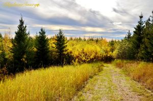 Lots of Yellow by gigi50