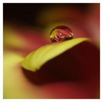 droplet 7 by mzkate
