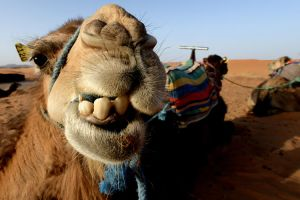 Postcard from Erg Chebbi 06 by JACAC