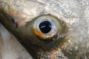 Fish Eye by Storms-Stock