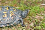 Just A Turtle by LDFranklin