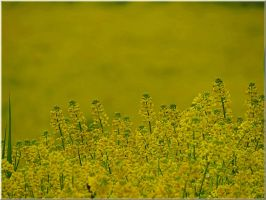 Yellow picture... by Yancis