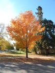 fall color9 by kingbob24