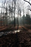Forest light by MontagneStock