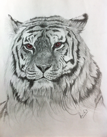 The Tyger by ms24khan