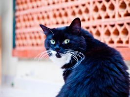 Cat Stock 2 by Ariel87-Stock